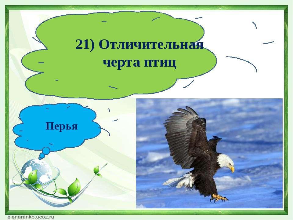 21) Отличительная черта птиц Перья