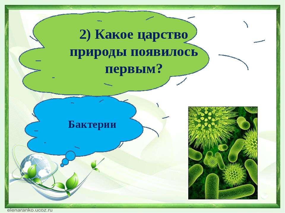 2) Какое царство природы появилось первым? Бактерии