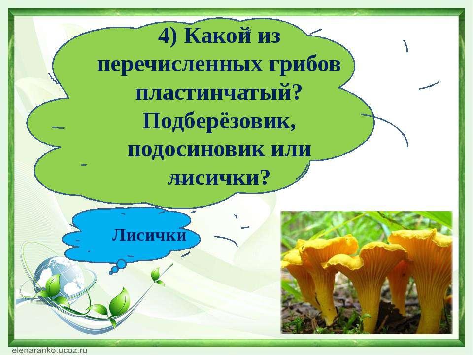 4) Какой из перечисленных грибов пластинчатый? Подберёзовик, подосиновик или ...