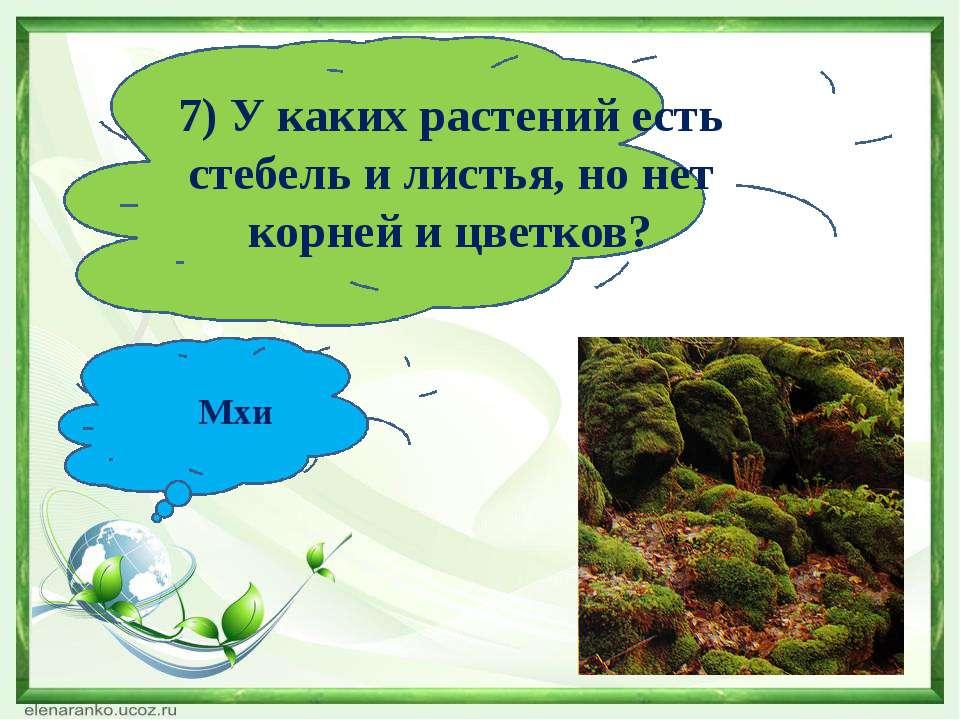 7) У каких растений есть стебель и листья, но нет корней и цветков? Мхи
