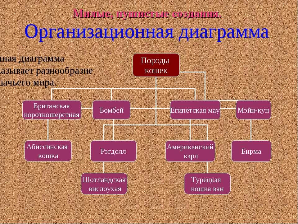 Милые, пушистые создания. Организационная диаграмма Данная диаграмма показыва...