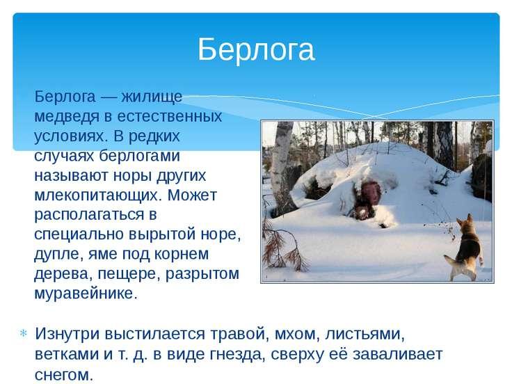 Берлога — жилище медведя в естественных условиях. В редких случаях берлогами ...