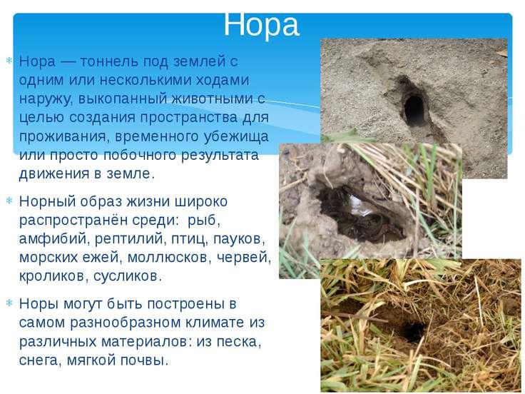 Нора — тоннель под землей с одним или несколькими ходами наружу, выкопанный ж...
