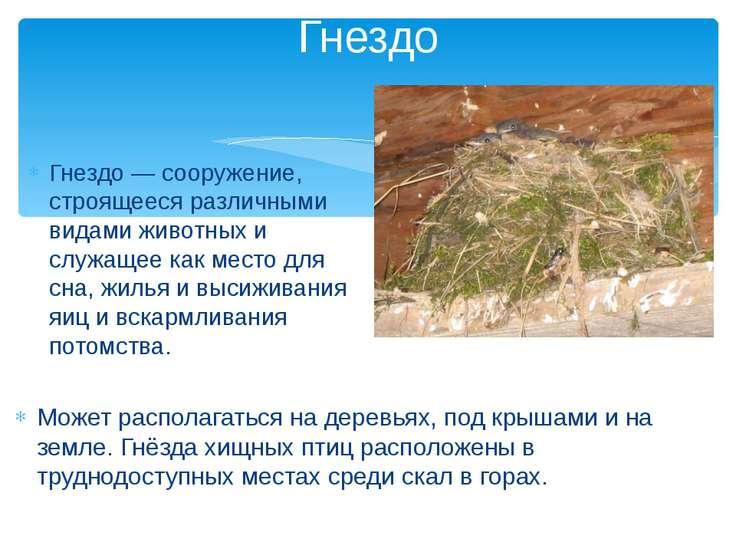 Гнездо — сооружение, строящееся различными видами животных и служащее как мес...