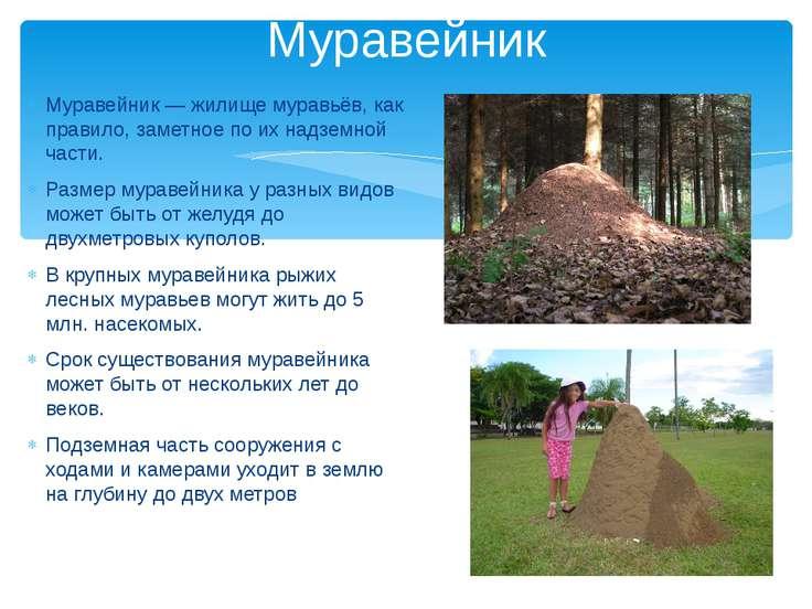 Муравейник — жилище муравьёв, как правило, заметное по их надземной части. Ра...