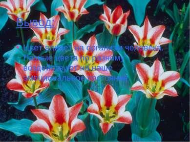 Вывод: Цвет влияет на организм человека. Разные цвета по разному воздействуют...