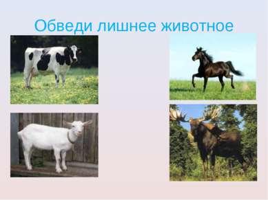 Обведи лишнее животное