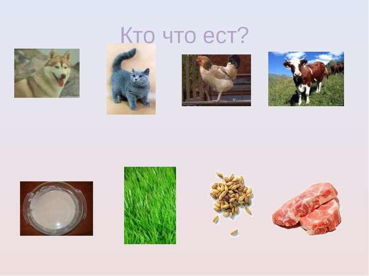 Кто что ест?