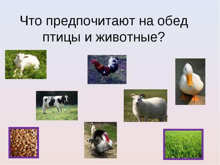Что предпочитают на обед птицы и животные?