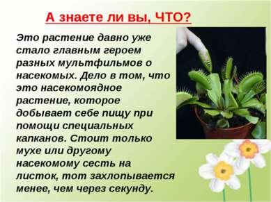 А знаете ли вы, ЧТО? Это растение давно уже стало главным героем разных мульт...