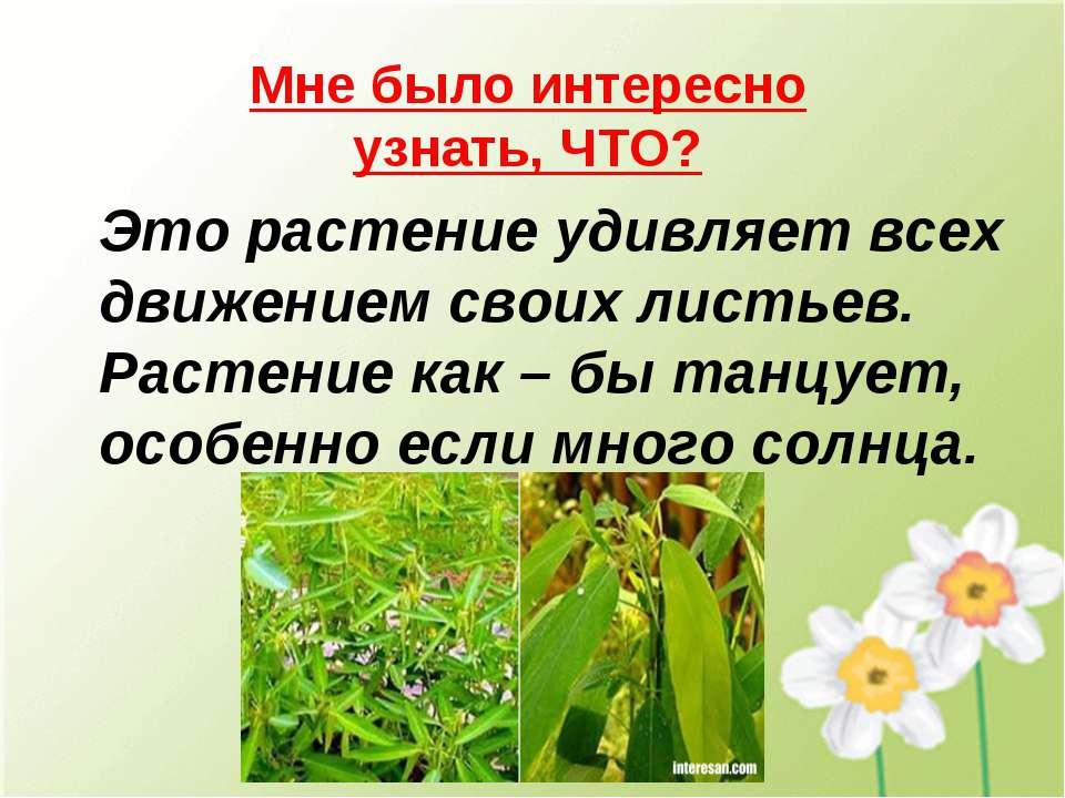 Это растение удивляет всех движением своих листьев. Растение как – бы танцует...