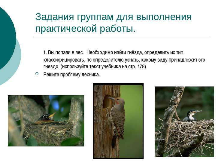 Задания группам для выполнения практической работы. 1. Вы попали в лес. Необх...