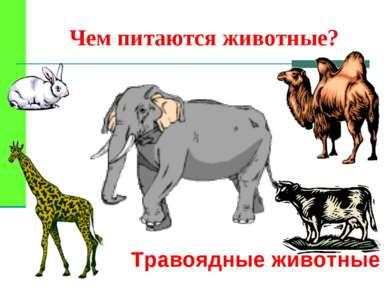 Чем питаются животные? Травоядные животные