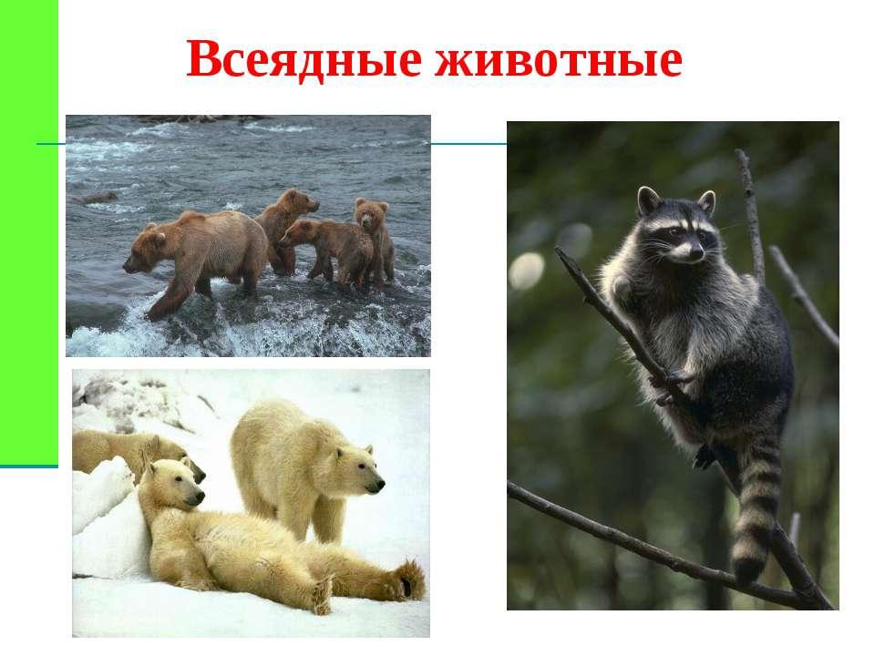 Всеядные животные картинки и названия