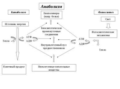 Катаболизм Источник энергии Анаболизм Фотосинтез Биополимеры (напр. белки) Св...