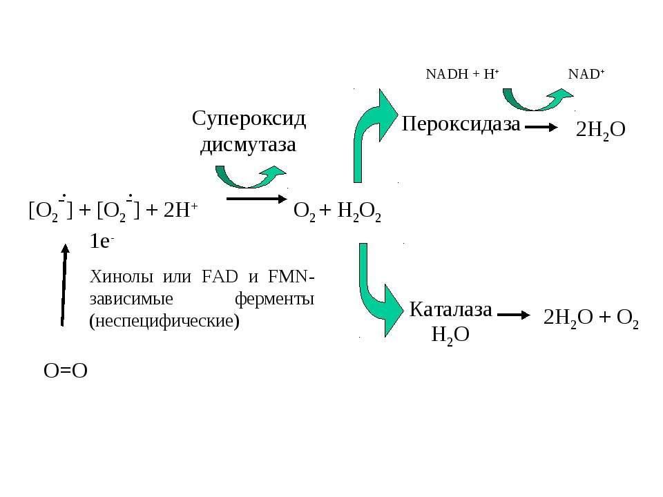 [O2-] + [O2-] + 2H+ O2 + H2O2 Cупероксид дисмутаза Пероксидаза Каталаза Н2О N...