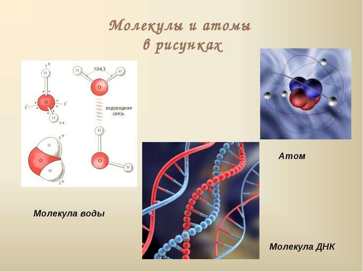 Молекулы и атомы в рисунках Молекула воды Атом Молекула ДНК