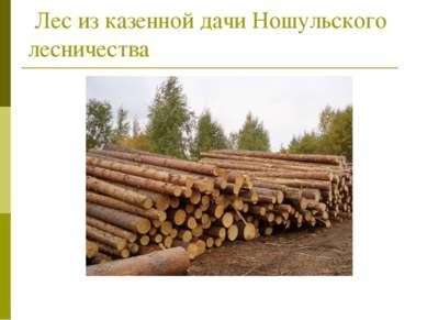 Лес из казенной дачи Ношульского лесничества
