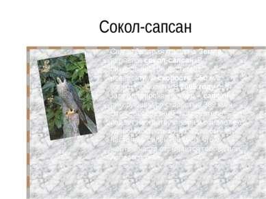 Сокол-сапсан Самая быстрая птица на Земле является сокол-сапсан. В пикировани...