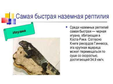 Самая быстрая наземная рептилия Среди наземных рептилий самая быстрая — черна...