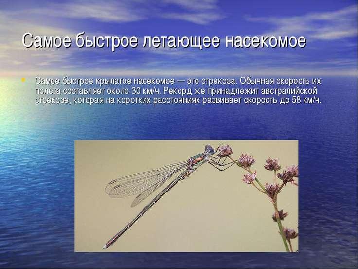 Самое быстрое летающее насекомое Самое быстрое крылатое насекомое — это стрек...
