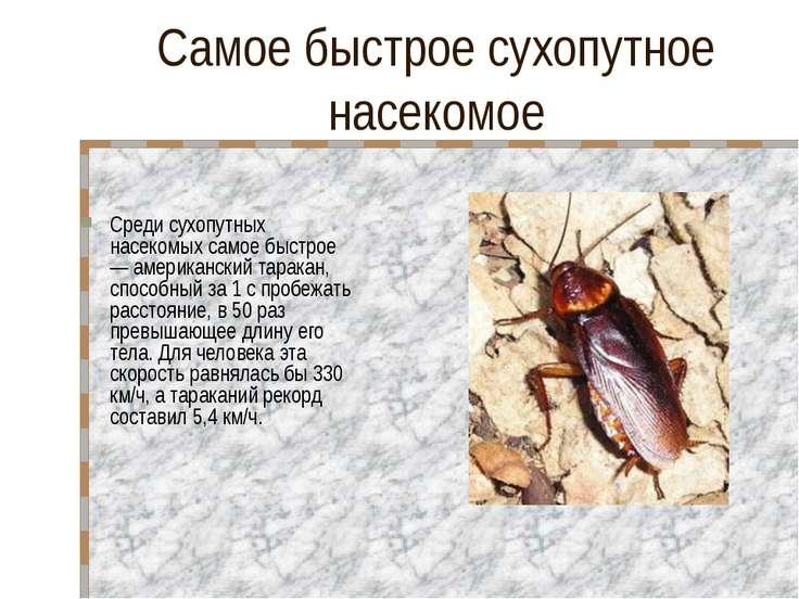 Самое быстрое сухопутное насекомое Среди сухопутных насекомых самое быстрое —...