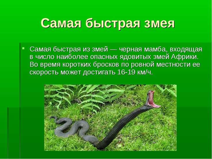 Самая быстрая змея Самая быстрая из змей — черная мамба, входящая в число наи...