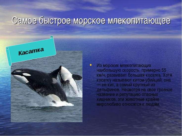 Самое быстрое морское млекопитающее Из морских млекопитающих наибольшую скоро...