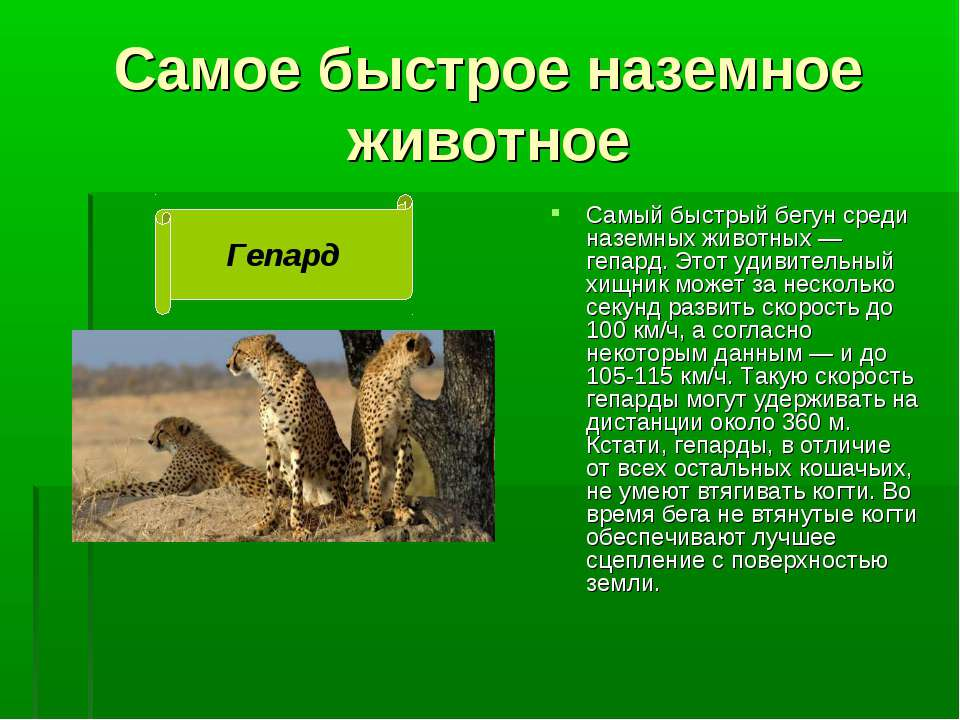 Самое быстрое наземное животное Самый быстрый бегун среди наземных животных —...