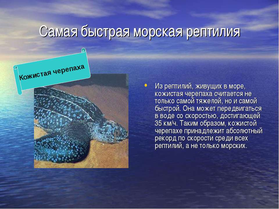 Самая быстрая морская рептилия Из рептилий, живущих в море, кожистая черепаха...