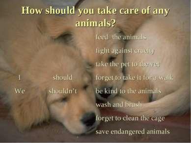 How should you take care of any animals?