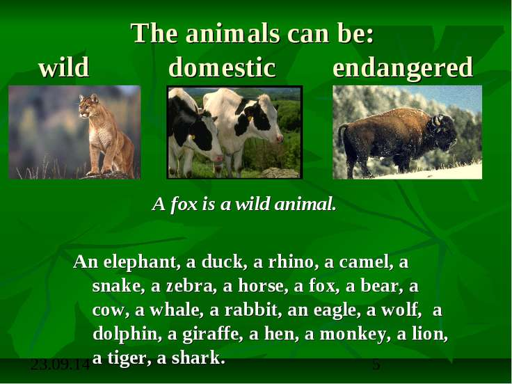 The animals can be: wild domestic endangered A fox is a wild animal. An eleph...