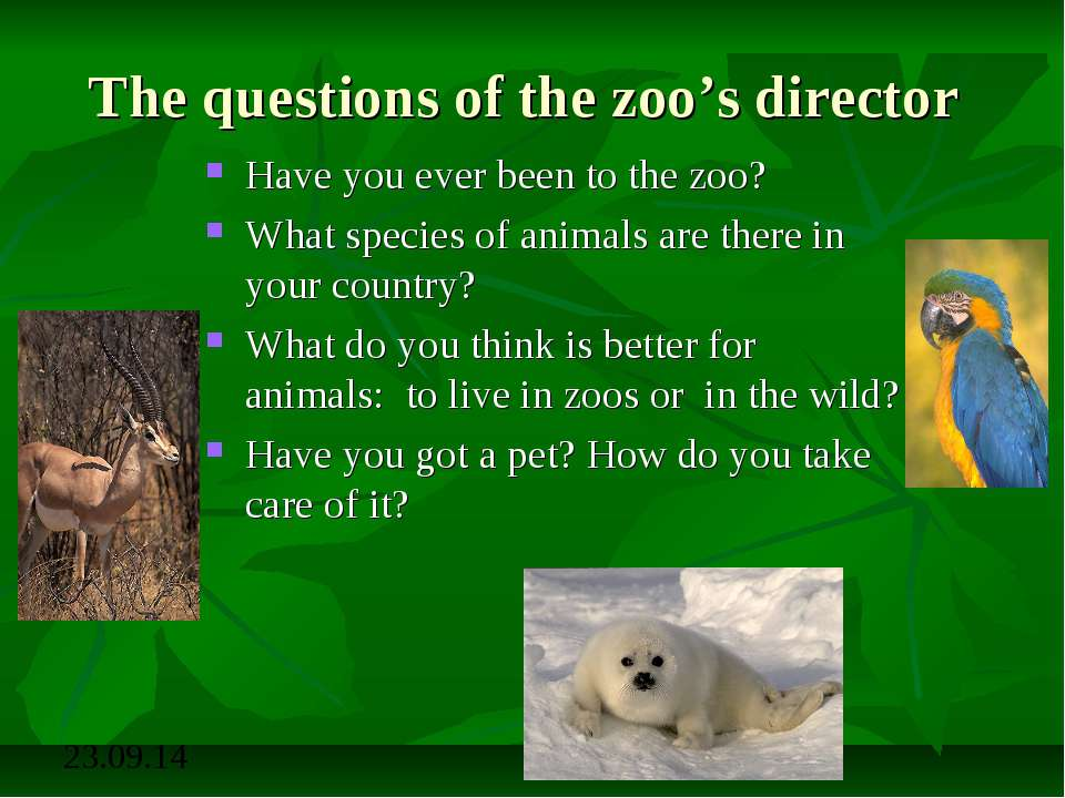The questions of the zoo's director Have you ever been to the zoo? What speci...
