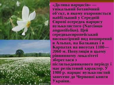 «Долина нарциciв» — унікальний ботанічний об'єкт, в якому охороняється найбіл...