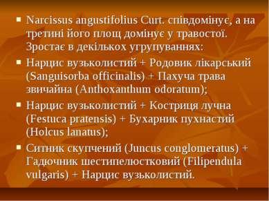 Narcissus angustifolius Curt. співдомінує, а на третині його площ домінує у т...