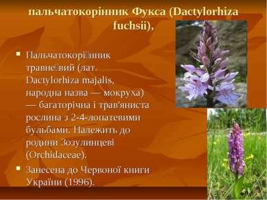пальчатокорінник Фукса (Dactylorhiza fuchsii), Пальчатокорі нник травне вий (...