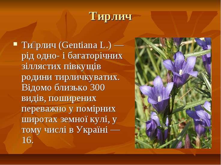 Тирлич Ти рлич (Gentiana L.) — рід одно- і багаторічних зіллястих півкущів ро...