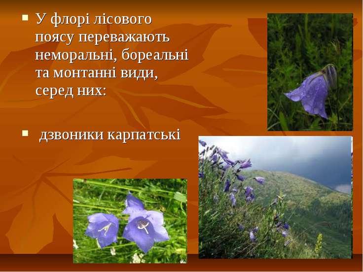 У флорі лісового поясу переважають неморальні, бореальні та монтанні види, се...