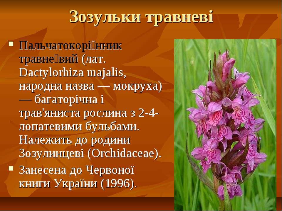 Зозульки травневі Пальчатокорі нник травне вий (лат. Dactylorhiza majalis, на...