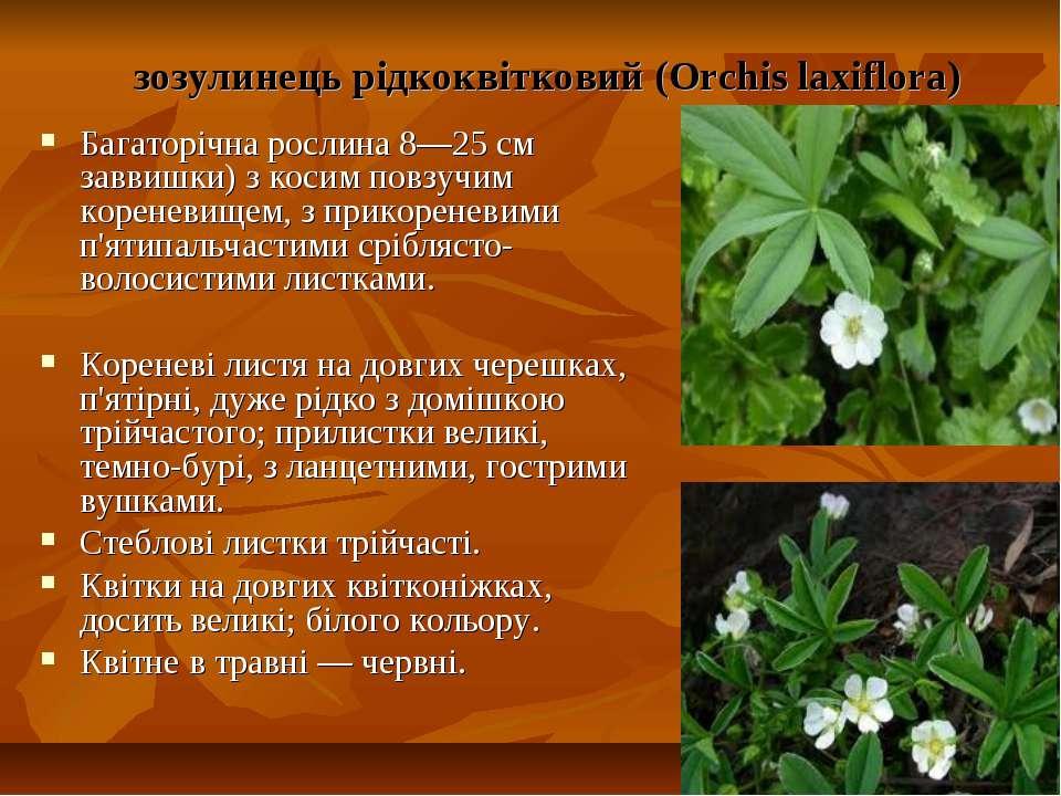 зозулинець рідкоквітковий (Orchis laxiflora) Багаторічна рослина 8—25 см завв...