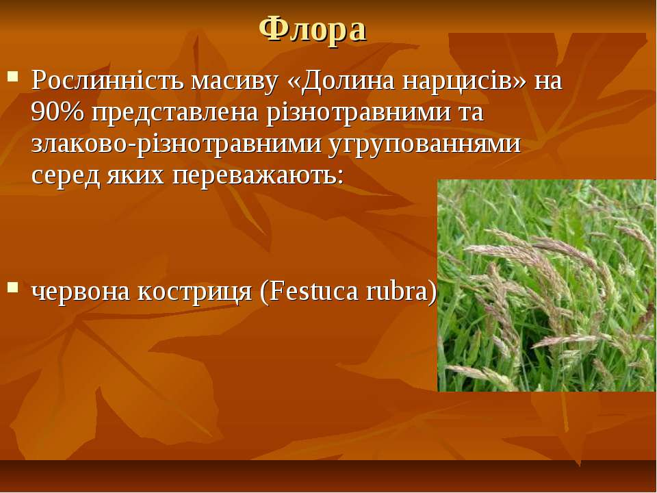 Флора Рослинність масиву «Долина нарцисів» на 90% представлена різнотравними ...