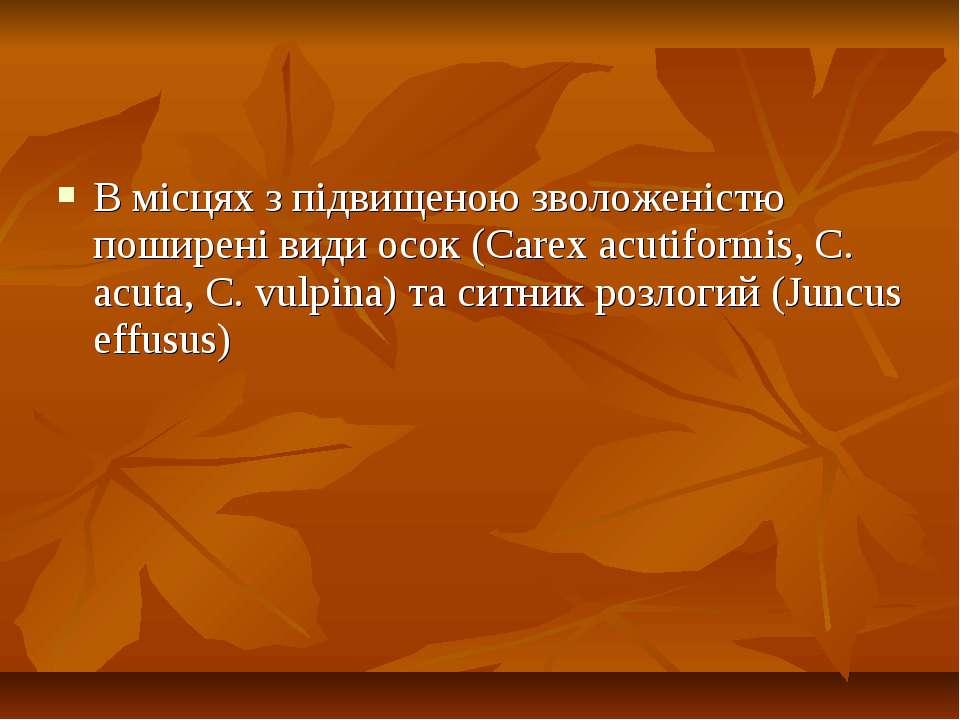 В місцях з підвищеною зволоженістю поширені види осок (Carex acutiformis, C. ...