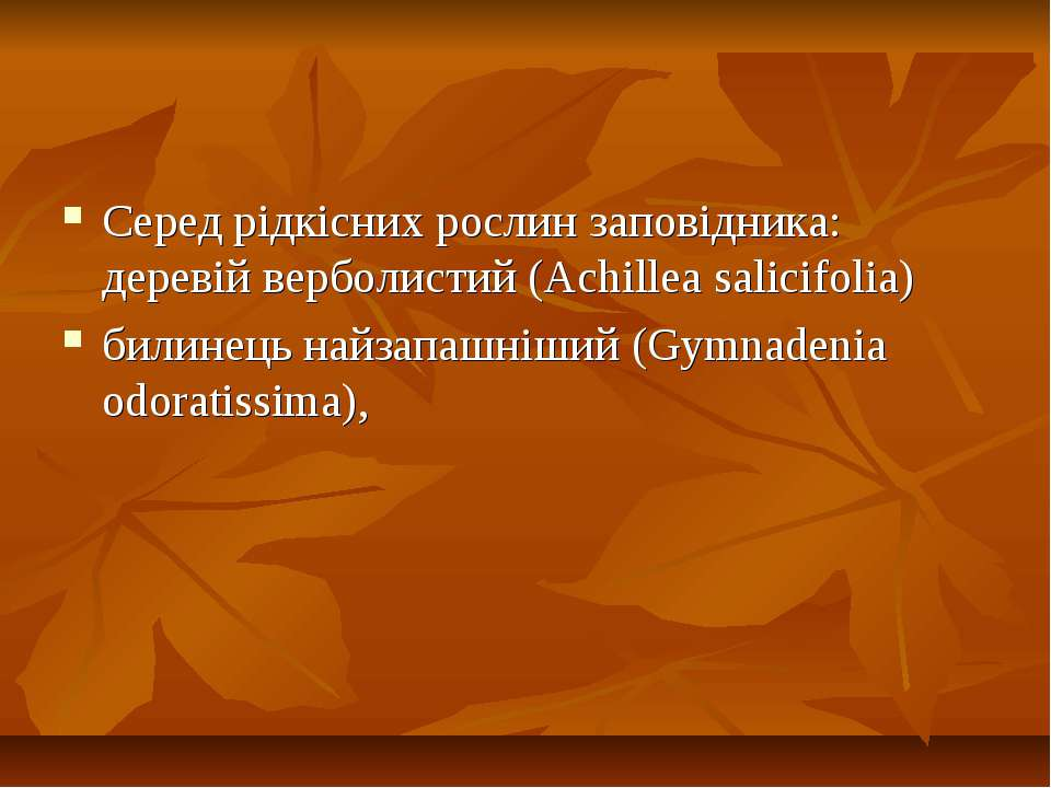 Серед рiдкicних рослин заповідника: деревій верболистий (Achillea salicifolia...