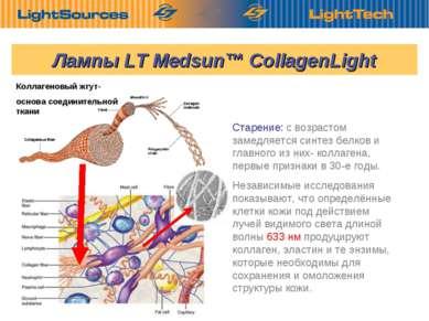 Старение: с возрастом замедляется синтез белков и главного из них- коллагена,...