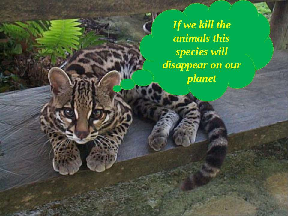 If we kill the animals this species will disappear on our planet