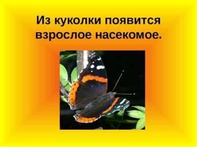 Из куколки появится взрослое насекомое.