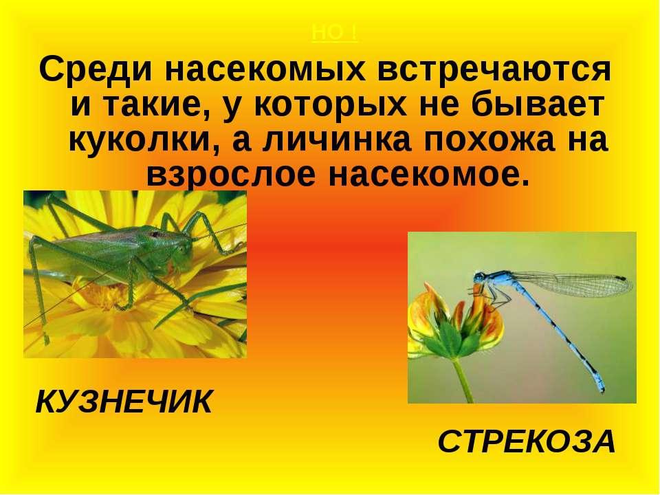 НО ! Среди насекомых встречаются и такие, у которых не бывает куколки, а личи...