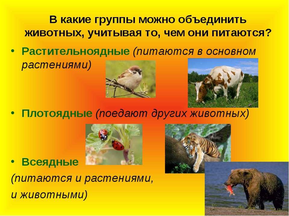 В какие группы можно объединить животных, учитывая то, чем они питаются? Раст...