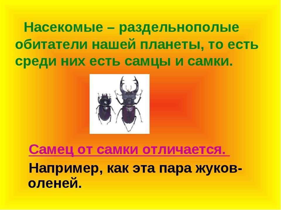 Насекомые – раздельнополые обитатели нашей планеты, то есть среди них есть са...