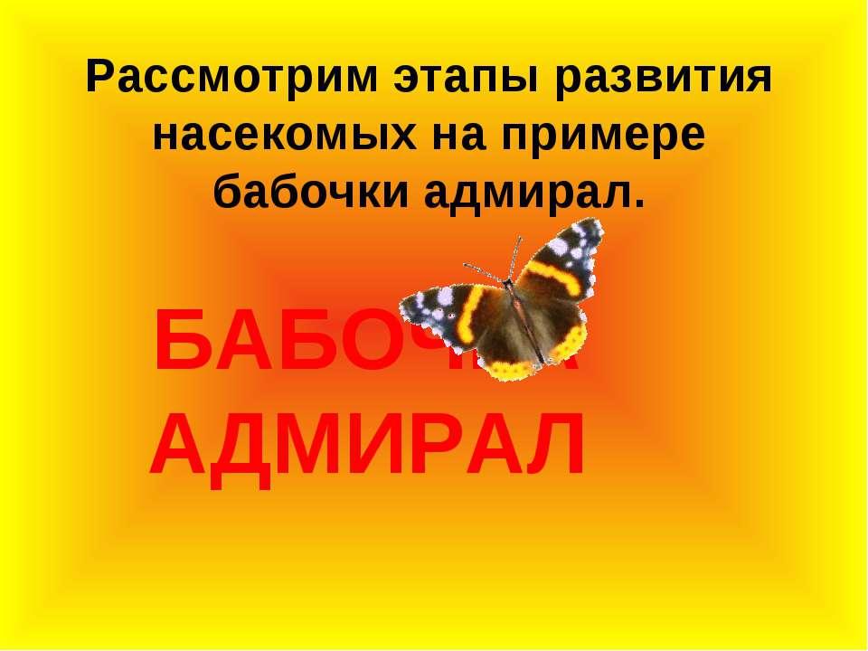 БАБОЧКА АДМИРАЛ Рассмотрим этапы развития насекомых на примере бабочки адмирал.